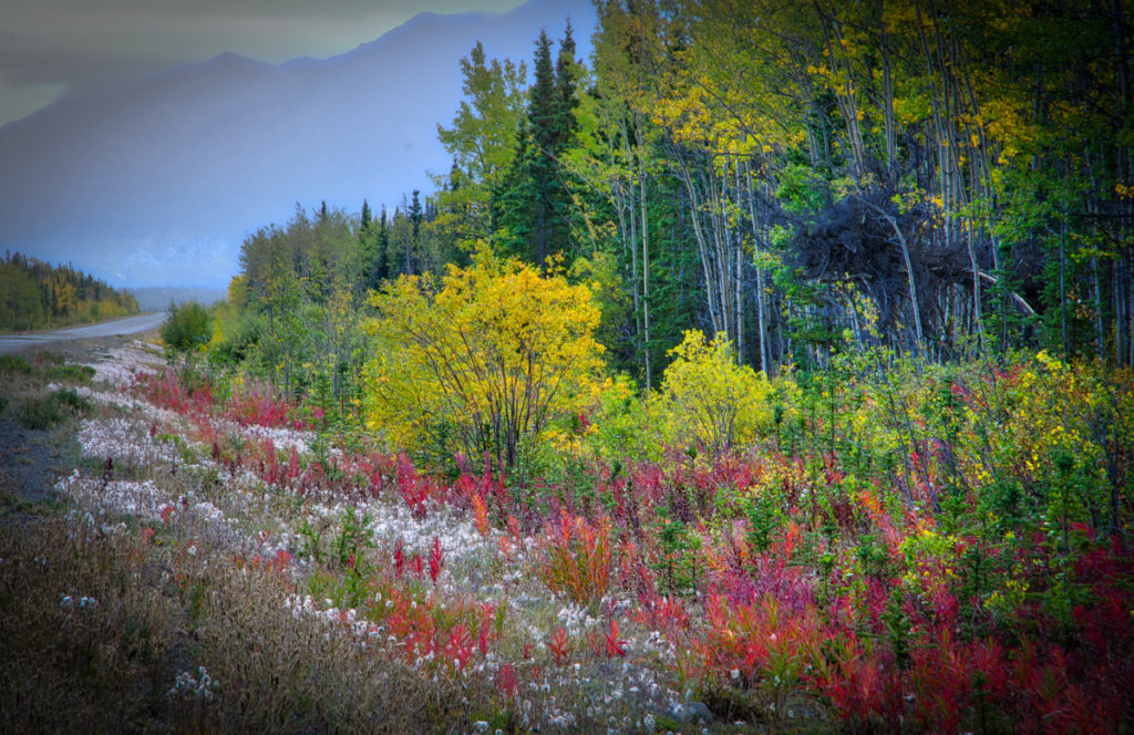 fall-haines-highway